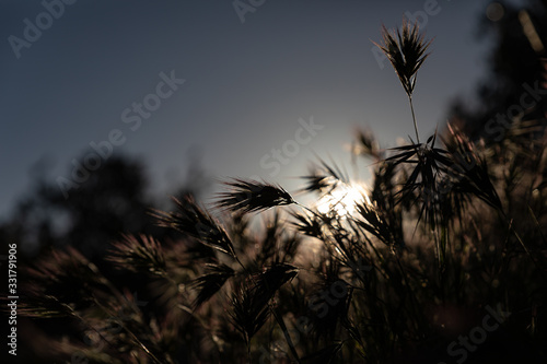Photo silhouette of desert grass at sunrise