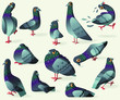 Set of funny cartoon gray dove. On a white background 12 vector birds characters with different emotions for stickers.
