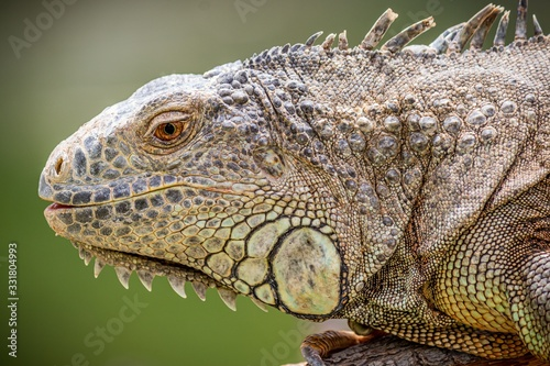 Closeup shot of a lizard with gray scales