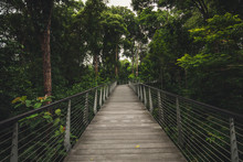 Singapore Tropical Botanical Garden Skywalk. It Is One Of Three Gardens, And The Only Tropical Garden, To Be Honoured As A UNESCO World Heritage Site