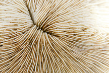 Texture Of Coral Or Mushroom Coral