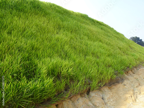 Canvas Print The grass is planted to prevent erosion of the soil slope