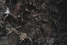 Background Texture Of Roots An...