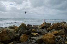 Die Küste Von Neuseeland