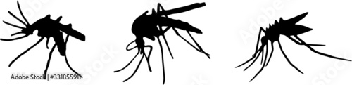 mosquito icon isolated on background Wallpaper Mural