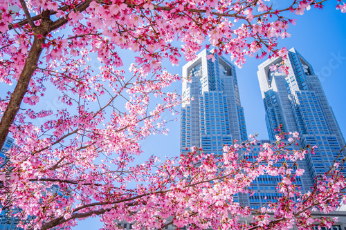 東京 桜 サクラ 都庁 高層ビル SAKURA Cherry Blossoms Canvas Print