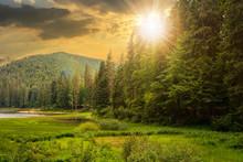Lake Summer Landscape. Beautif...