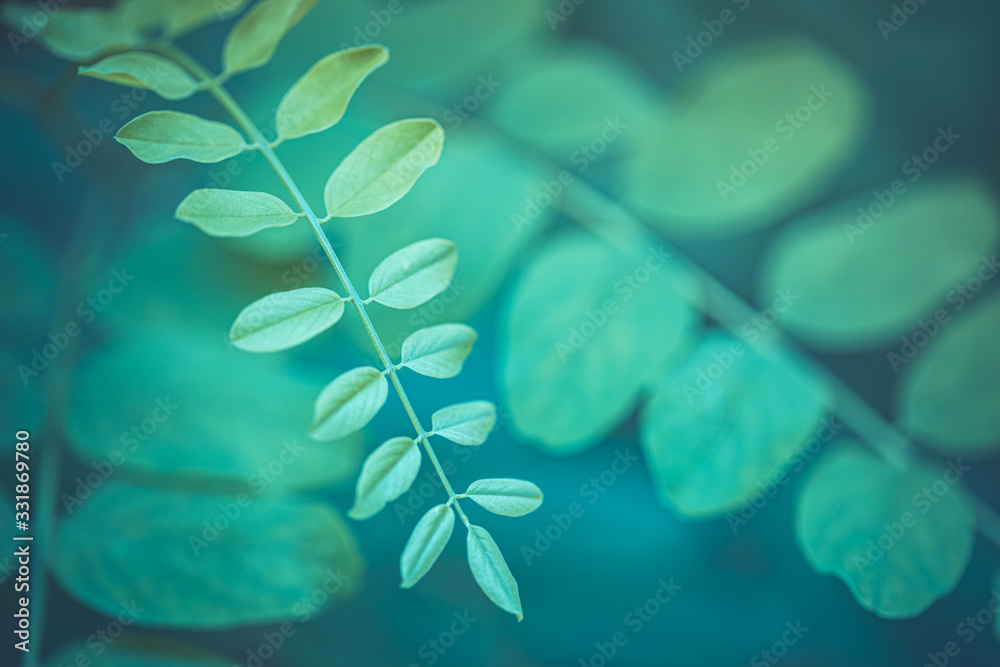 Fototapeta Dream nature. Closeup nature view of soft green leaves on blurred greenery background in garden with copy space using as background natural green plants landscape, ecology, fresh wallpaper concept.