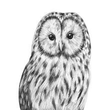 Cute Hand Drawn Owl Portrait. ...