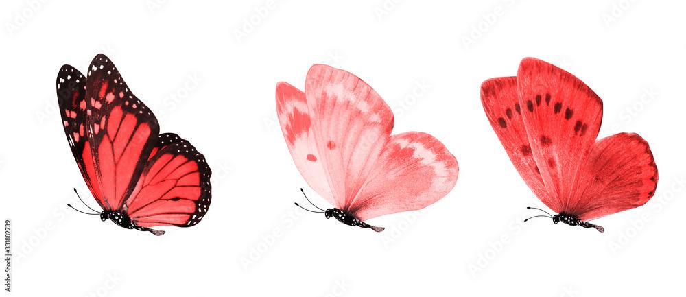 Fototapeta tropical butterflies isolated on white.
