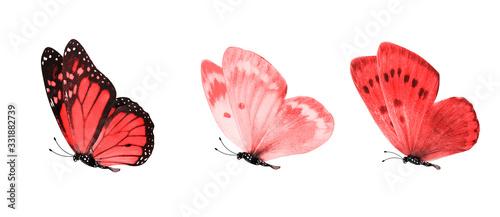 Obraz na plátně tropical butterflies isolated on white.