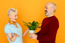 Cheerful Handsome Senior Man In Shirt And Vest Holding Pot Giving Houseplant To His Attractive Wife On Birthday. Happy Retired Male And Female Cultivating Flowers Together At Home, Posing Isolated