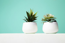 Couple Of House Plant. Abstrac...