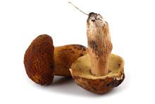 King Bolete And Rugiboletus Extremiorientalis Mushrooms