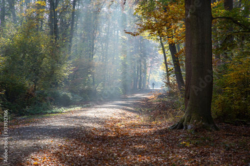 Obraz Forest in autumn with visible rays of the morning sun, the trees and autumn leaves shining. In the background a runner's shiloute - fototapety do salonu