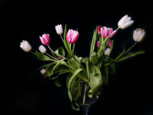 Bouquet Of Pink White And Purple Tulips In A Vase On A Black Background, Spring Flowers In A Vase, Copy Space