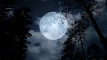 Centered Full Moon Behind Tree...