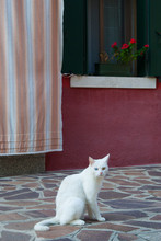 A White Cat Sitting In Front O...