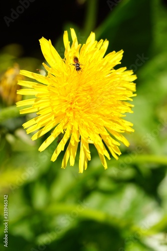 Vertical shot of a yellow flower and a bee on it