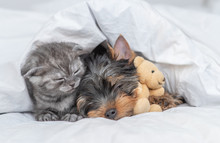 Kitten And Yorkshire Terrier P...