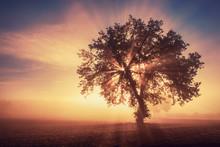 Single Tree In The Fog