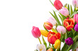 Multicolored tulips on a white background. Bouquet of spring flowers. Isolate on white background