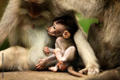 Photo Family of monkeys. Bali a zoo. Indonesia