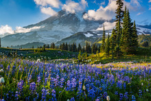 Flower Season, Mount Rainier, Washington St