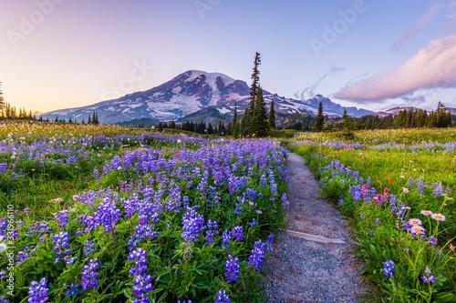 Reflection lake trail-Summer, Mount Rainier Canvas Print