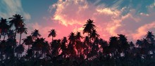 Palm Trees Against The Sky, Be...