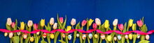 Banner Of Colorful Tulip Sprin...