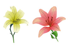 2 Lily Flower Red And Yellow I...