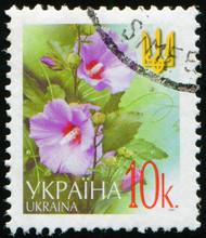 UKRAINE - CIRCA 2002: Stamp Printed By Ukraine, Shows Flowering Plant Hollyhocks (Alcea Setosa), Circa 2002
