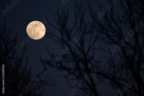 Photo Mond zwischen Bäumen am Nachthimmel, Dunkelblau