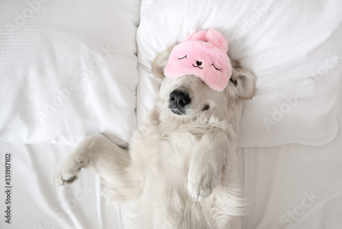 happy golden retriever dog in a sleeping mask relaxing in bed Fototapete