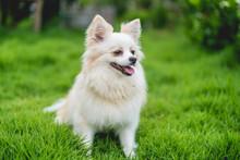 Cute White Dog Close Up