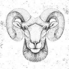 Hipster Animal Head Of Ram Or Mouflon. Hand Drawing Muzzle Of Ram