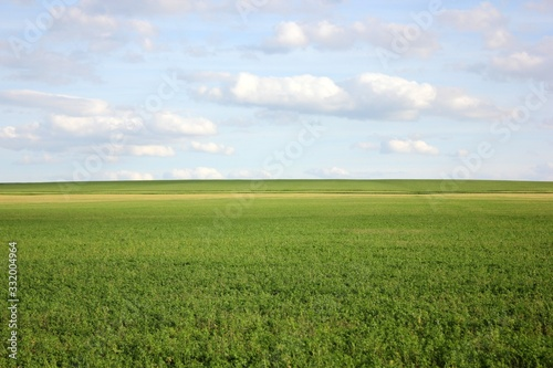 Vászonkép Authentic summer countryside landscape with green field and blue cloudy sky