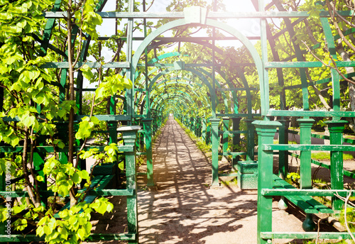 Photo Allay corridor decoration pathway in the garden in Peterhof Saint Petersburg reg