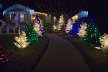 Christmas Lights And Deer In F...