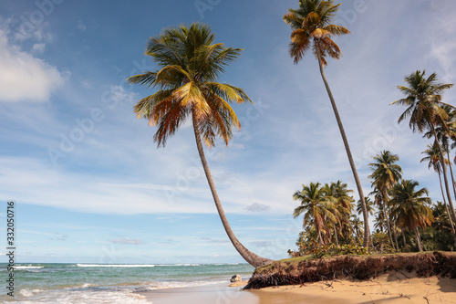 tropical beach costa esmeralda with coconut trees