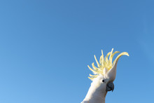 Portrait Of A Parrot Cockatoo ...