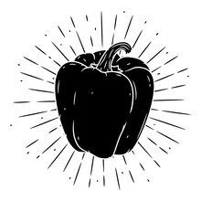 Sweet Pepper. Hand Drawn Vector Illustration With Sweet Pepper And Divergent Rays. Used For Poster, Banner, Web, T-shirt Print, Bag Print, Badges, Flyer, Logo Design And More.