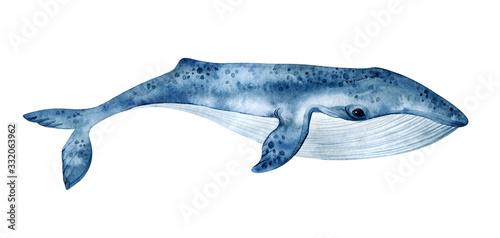 Watercolor blue whale illustration isolated on white background Fototapeta