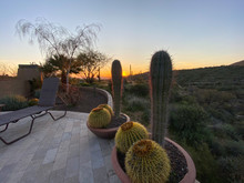 Barrel Cactus Desert Sunset