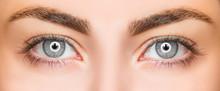 Close-up Beautiful Grey Eye Wi...