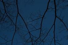 枝と青い空