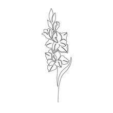 Gladiolus Flower On White