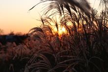 석양, 목초, 태양, 네이처, Sky, 들판, 경관, 일출, 실루엣, 저녁, 여름, 식물, 밀, Orange, 모닝, 가을, Yellow, 해넘이, 농장, 경작, 구름, 목초지, 새벽, 호수, 오늘밤