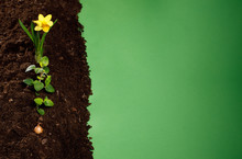 Planting Seeds And Flowers In ...